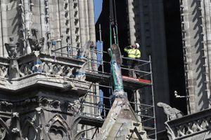 Điều gì dẫn tới số phận kỳ lạ của đàn ong 'khủng' trong vụ hỏa hoạn Nhà thờ Đức Bà Paris?