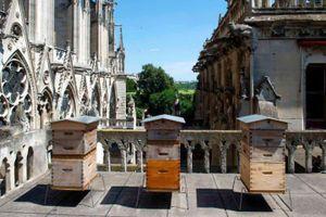 Bầy ong trên đỉnh Nhà thờ Đức Bà vẫn sống sót kỳ diệu
