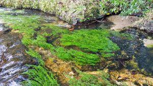 Sắc thái của một trong những dòng sông đẹp nhất thế giới