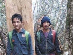 Đắk Lắk: Những cánh rừng pơ mu đang bị tận diệt