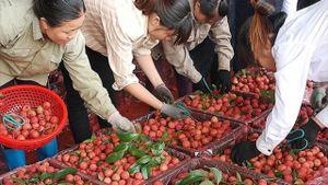 Không có tem truy nguồn gốc, hoa quả Việt 'hết đường' sang Trung Quốc