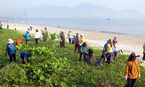 Chung tay gìn giữ môi trường biển