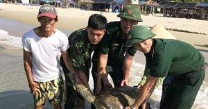 Thừa Thiên Huế: Thêm một cá thể rùa quý hiếm được thả về môi trường biển
