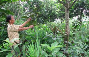 Hà Nội đẩy mạnh công tác bảo tồn đa dạng sinh học