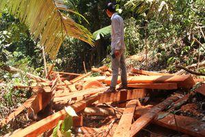 Quảng Nam: Rừng Trà Leng bị tàn phá