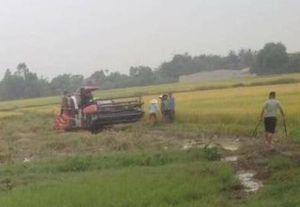 Thanh Hóa: Bảo kê địa bàn gặt lúa, côn đồ hành hung người dân