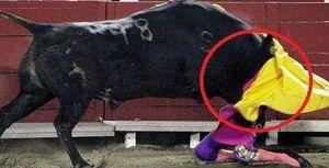 Clip: Bò tót nặng nửa tấn húc nữ võ sỹ gãy xương hàm, vỡ hốc mắt
