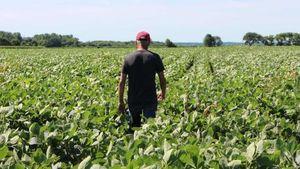 Mỹ sẽ đưa ra chương trình mới hỗ trợ nông dân