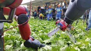 Sắp nở rộ ứng dụng robot trong nông nghiệp