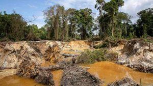 Nỗ lực bảo vệ rừng nhiệt đới Amazon trong cơn sốt vàng
