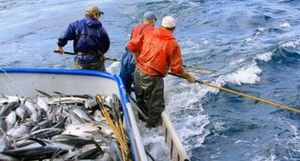 20 tỷ thuế quan của EU có thể đánh vào cá ngừ albacore Mỹ