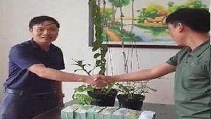 Thương vụ mua lan giá 3,4 tỉ đồng: Động tác thổi phồng