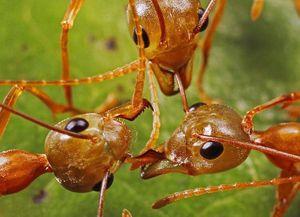 Điểm chung giữa kiến và con người trong các cuộc xung đột
