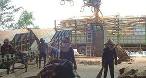 Mặt trái của việc chế biến dăm gỗ bán qua cửa khẩu Lao Bảo