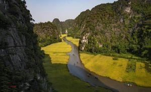 Hội mùa vàng trên sông Ngô Đồng