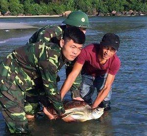 Giải cứu 2 cá thể rùa biển quý hiếm ở biển Thừa Thiên - Huế