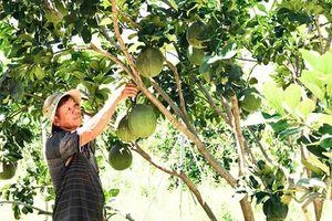 Điểm tựa cho nông dân