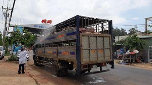 Dịch tả lợn châu Phi lan rộng: Người chăn nuôi vẫn quá chủ quan
