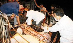 Mắc sai phạm trong kiểm dịch, 2 cán bộ thú y Tuyên Quang bị đình chỉ công tác