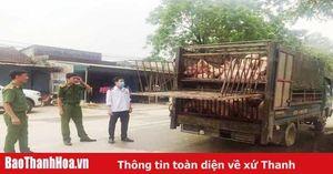 Bắt giữ xe tải chở lợn không có giấy tờ kiểm dịch