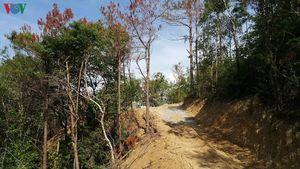 Dấu hiệu hủy hoại rừng khi thi công đường điện 220kV