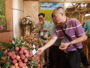 Quả vải Việt Nam đứng thứ ba thế giới về sản lượng