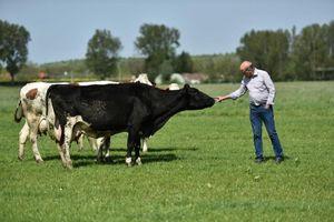 Chọn sữa hữu cơ: Không chỉ theo 'trend' mà còn phải theo chuẩn