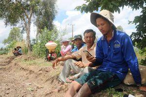 Nông dân lao đao vì thương lái 'lật kèo' bỏ lúa