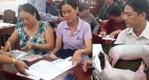 Kiên Giang chi tiền hỗ trợ cho các hộ bị dịch tả lợn châu Phi