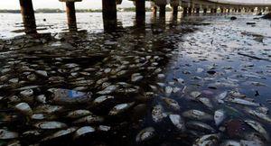 Biến đổi khí hậu khiến đại dương mất 17% sự sống tới năm 2100