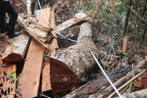 Tỉnh Bắc Kạn kiên quyết xử lý nghiêm vụ phá rừng tại huyện Bạch Thông