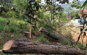 Lâm Đồng: Bắt tạm giam nhân viên Ban Quản lý rừng phòng hộ Đại Ninh