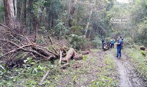 Nan giải 'cuộc chiến' giữ rừng nơi đại ngàn Kbang (Bài cuối: áp lực giữ rừng đè nặng)