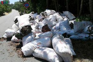 Điều tra vụ phá rừng thông đặc dụng tại Thừa Thiên Huế
