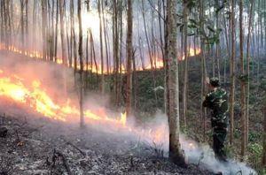 Nắng nóng khiến rừng liên tục cháy ở Phú Yên
