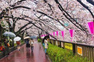 Nhật hủy bỏ tư cách đại diện visa của 7 công ty du lịch