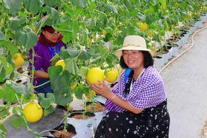 Du lịch nông nghiệp hấp dẫn khách tham quan