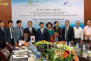 Hàn Quốc và Việt Nam hợp tác cải thiện chuỗi giá trị lúa gạo tại đồng bằng sông Hồng