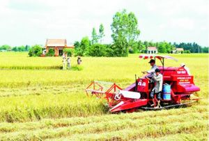 Ðẩy mạnh sản xuất nông nghiệp thích ứng biến đổi khí hậu