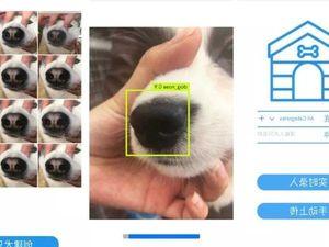 Công ty Trung Quốc sử dụng công nghệ nhận diện khuôn mặt để 'tìm chó lạc'