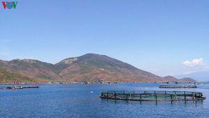 Khuyến khích nuôi thủy sản trên biển để giảm khai thác ven bờ