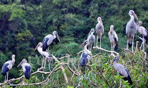Bình yên Thung Nham, đất lành chim đậu
