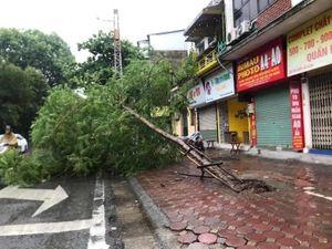 Hà Nội mưa lớn, cây đổ la liệt do ảnh hưởng bão số 3