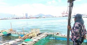 Nuôi thủy sản nước ngọt, nước lợ cùng khốn đốn vì hạn hán