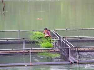 Nghệ An: 7 tháng đầu năm sản lượng nuôi trồng thủy sản tăng mạnh