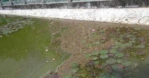 4 hồ điều hòa bị ô nhiễm ở Quảng Ninh hiện tại ra sao sau hơn 1 tháng thử nghiệm bằng bột thiên nhiên?