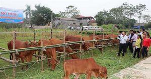 Chuyển hướng chăn nuôi có hiệu quả