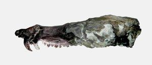Argentina phát hiện hóa thạch lớp Thú giống loài sóc trong 'Kỷ băng hà'