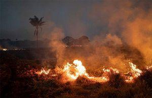 'Lá phổi thế giới' chìm trong biển lửa: Những hình ảnh và con số báo động
