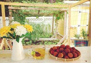 Mẹ Việt ở Mỹ không có kinh nghiệm vẫn quyết làm vườn vì nhớ vị quê nhà
